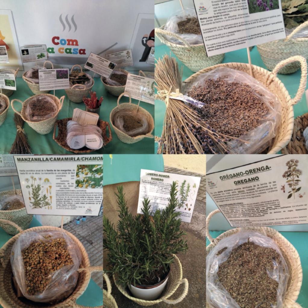 Taller del plantas aromáticas de verdura Actividades Mendoza Colectividades